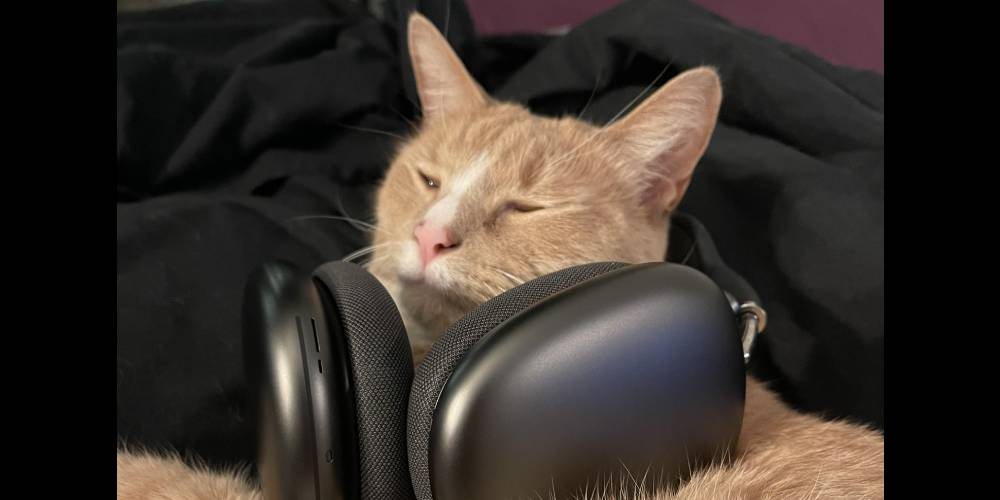 Cat wearing airpods max